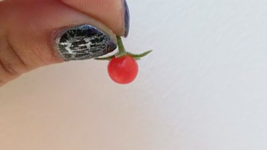 Diese Mini-Tomate von nur wenigen Millimetern Durchmesser erntete die Thüringen24-Leserin Sandra Lippert.