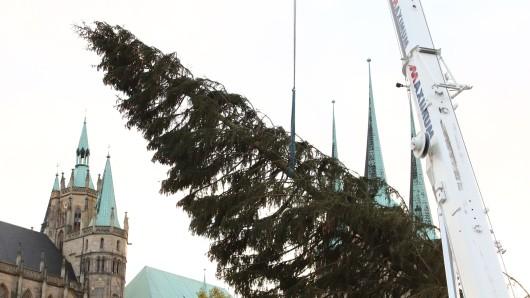 Rupfi, der Baum für den Erfurter Weihnachtsmarkt 2018, wurde von einem Kran auf dem Domplatz aufgestellt.