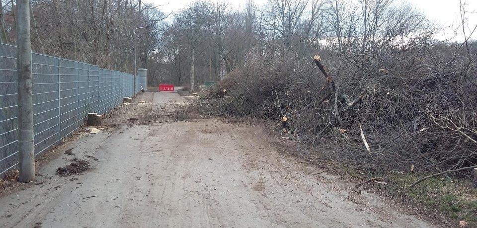Wegen der Buga 2021 in Erfurt werden 1.000 Bäume im Nordpark gefällt.