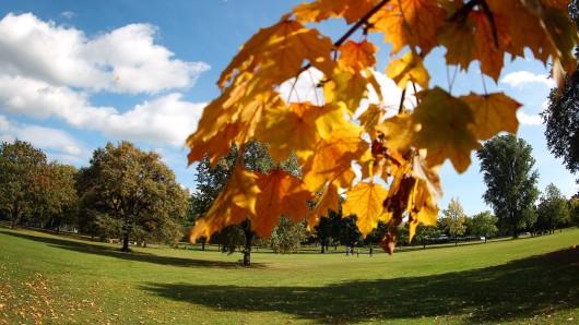 Im Nordpark in Erfurt wurden viele Bäume gefällt, doch es wird auch in großem Stil nachgepflanzt. Im Rahmen der Buga 2021 tut sich einiges. (Archivfoto)