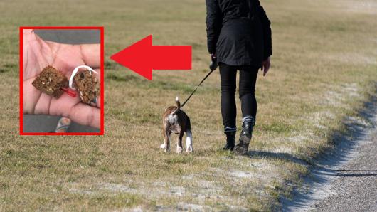 Eine Frau aus Erfurt macht bei einem Spaziergang mit ihrem Welpen einen schockierenden Fund.