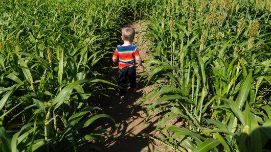 Das Maislabyrinth aus Erfurt hat leider traurige Nachrichten... (Symbolbild)