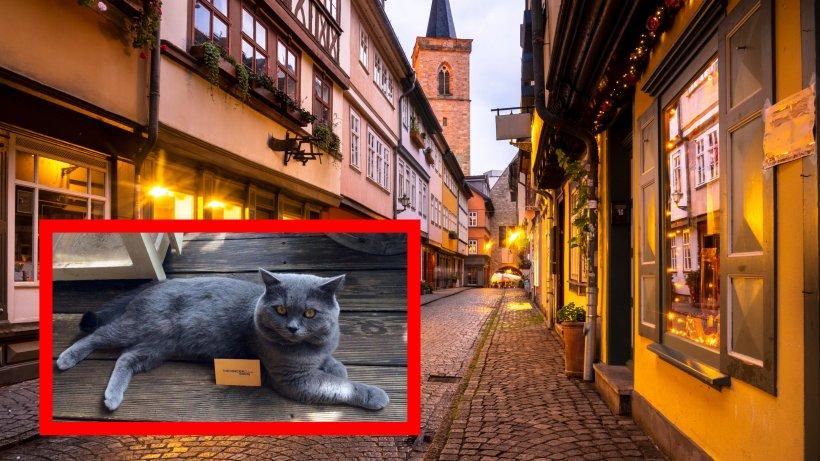 Erfurt: Krämerbrückenkater verlässt Stadt – Anwohner traurig