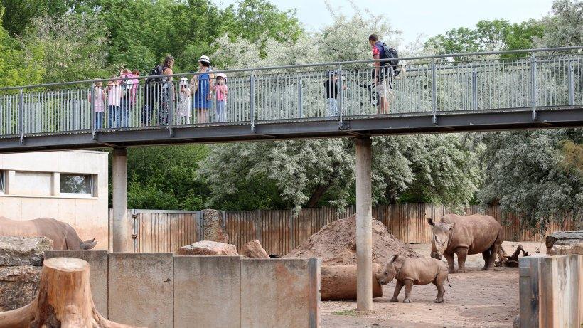 Zoo Erfurt will DIESES Tier retten – es ist ein echter Hingucker