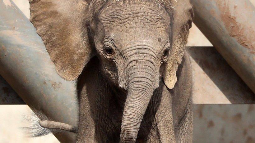 Zoo Erfurt: Elefanten ganz aufgeregt – dabei ist in ihrem Gehege nur ein Detail anders