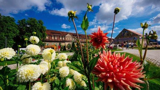 Blumen adé! Erfurt mäht die Buga-Blumen. (Archivbild)