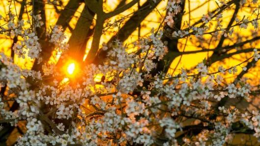 Zwei Wochen vor dem metorologischen Frühlingsanfang schickt der Lenz erste Grüße nach Thüringen. (Symbolbild)