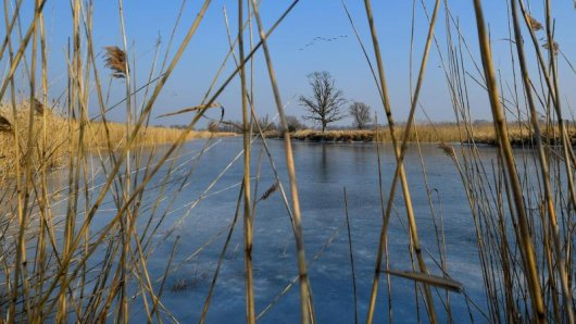 Unter dem Eis eines Teichs in Ilmenau wurde ein Toter gefunden.