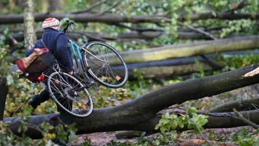 Der Deutsche Wetterdienst warnt davor, dass bei Sturm in Thüringen Bäume entwurzelt werden könnten. (Archivfoto)