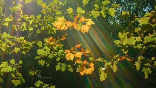 Am Wochenende lohnt sich in Thüringen der Gang in die Natur. Bei Temperaturen bis zu 27 Grad wird es im Goldenen Herbst nochmal ungewöhnlich warm.