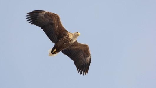 Das Tier war gegen einen Lkw geprallt und hatte sich einen Flügel gebrochen. (Symbolbild)