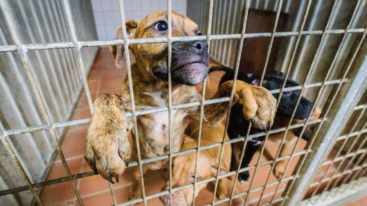 In Thüringen ist ein Hund aus einem Tierheim gestohlen worden. Und zwar gleich zwei Mal. (Symbolbild)