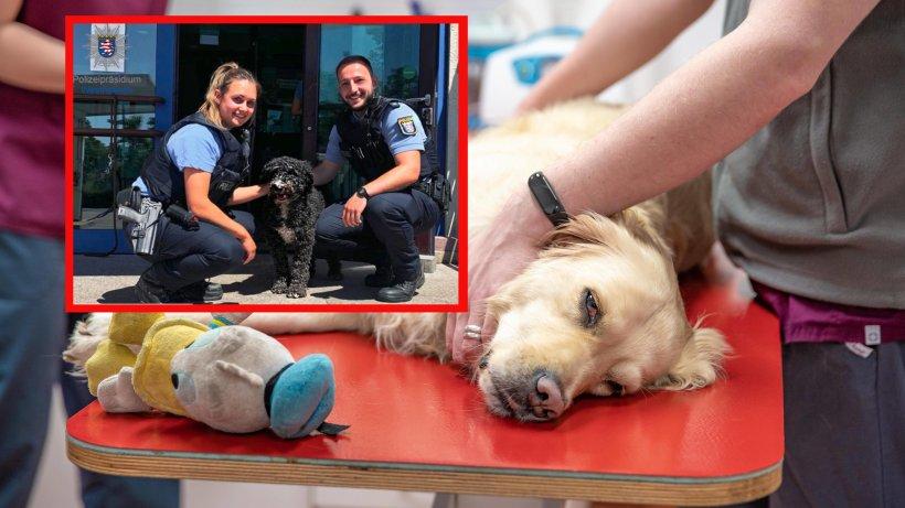 Hund: Familie erhält Anruf von Tierarzt – und alarmiert Polizei