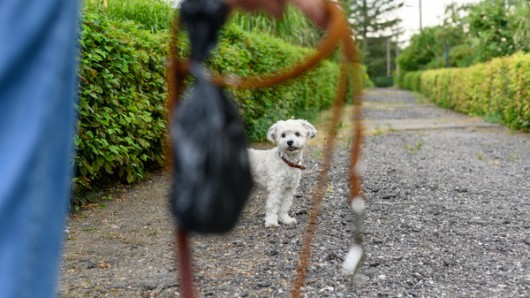 Die Hundehalterin erntet durch ihr unmenschliches Verhalten Kritik im Internet. (Symbolbild)