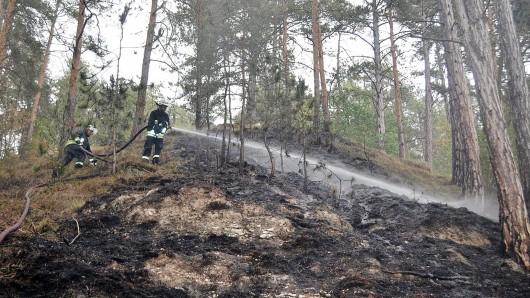 Im Kyffhäuserkreis brannte am Samstag ein Waldgebiet. (Symbolbild)