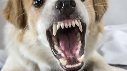 In Nordhausen hat ein Hund einen Polizisten gebissen. (Symbolbild)
