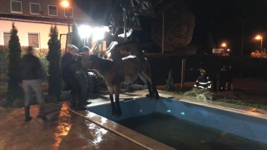 Ein ausgebüxtes Pferd ist in Schmalkalden in einen Pool gefallen und musste mit Radlader befreit werden.