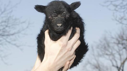 Zum anbeißen süß: Ein solch winziges Wesen hat in Thüringen einen Mann mit Hund verfolgt.