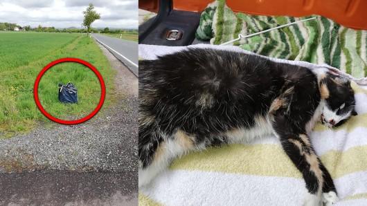 Unvorstellbar, was das kleine Kätzchen vor seinem Tod für Torturen über sich ergehen lassen musste. Mit einer Plastiktüte über den Kopf gezogen, wurde die Katze einfach an einem Straßenrand in Thüringen abgestellt.