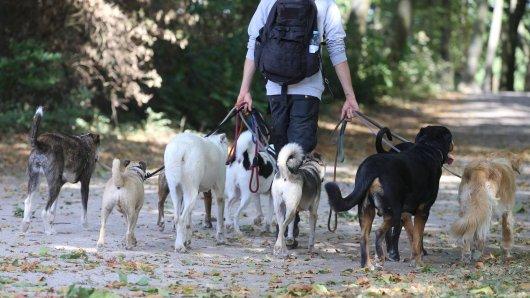 Für Hundesitter gibt es in den USA extra eine App, die Herrchen und Sitter zusammenführt. (Symbolfoto)
