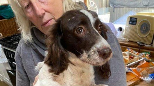 Hund Tara ist nach elf Monaten wieder zurück bei ihrer Familie - allerdings in einem desolaten Zustand.