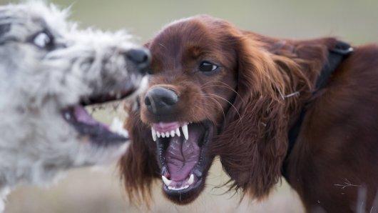 Jena: Eigentlich wollten zwei Hundehalter nur eine Auseinandersetzung ihrer beiden Vierbeiner beenden. Doch dann eskaliert die Situation. Hier mehr erfahren!