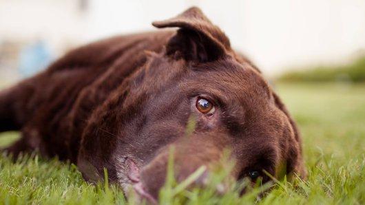 Kate Chacksfields hat ihren Hund verloren und hat nun eine Warnung an alle Besitzer. (Symbolfoto)