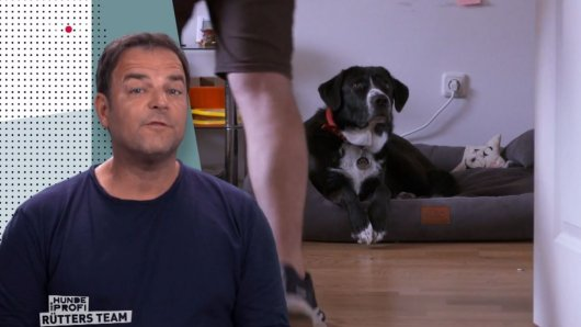 Martin Rütter schaut sich Hund Theo genau an. Der sorgt für Ärger, denn er macht immer DAS
