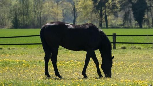 In Thüringen ist erneut ein Pferd mit einem Messer im Genitalbereich schwer verletzt worden.