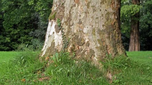 In Thüringen ist eine 19-Jährige bei einem Unfall gegen einen Baum gefahren.