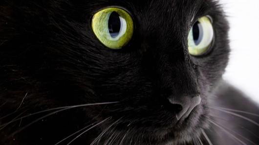 Ist eine schwarze Katze unter der Leiter durchgelaufen? Anders kann man sich diese Pechsträhne beinahe nicht erklären. (Symbolbild)