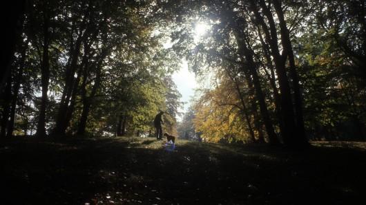 Ein Spaziergang mit dem Hund im Wald oder eine ausgedehnte Shopping-Tour: Die Sachsen können den Buß- und Bettag als Feiertag nutzen. In Thüringen ist es ein normaler Arbeitstag. (Symbolfoto)