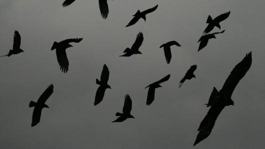 Dutzende Vögel verirrten sich mitten in der Nacht in eine Wohnung in Suhl. Völlig aufgelöst alarmierte die heimgesuchte Bewohnerin die Polizei. (Symbolbild)