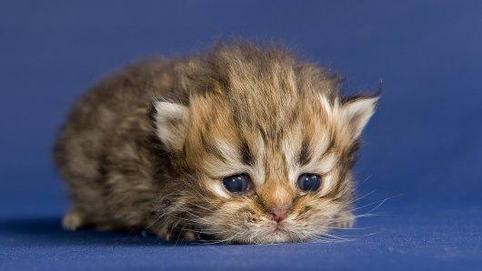 Ein kleines Kätzchen. (Symbolfoto)