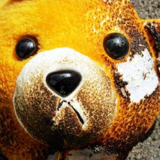 Ein durch einen Haushaltsbrand verbrannter Teddy mit verkohltem Stoff .