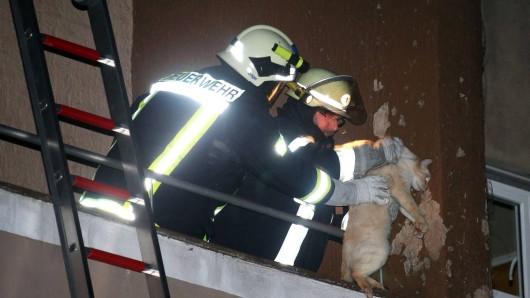 Beim Versuch die vierbeinigen Bewohner aus dem brennenden Gebäude zu retten, wurden zwei Feuerwehrleute verletzt. (Symbolbild)