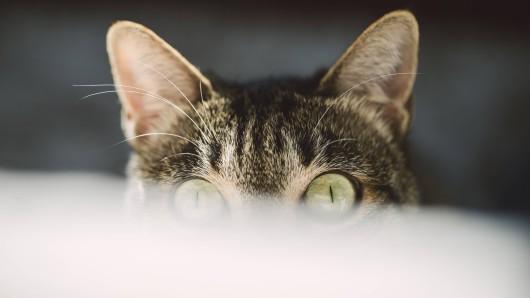 Eine Katze hat in Nordhausen womöglich die Bewohner eines Hauses gerettet. (Symbolfoto)