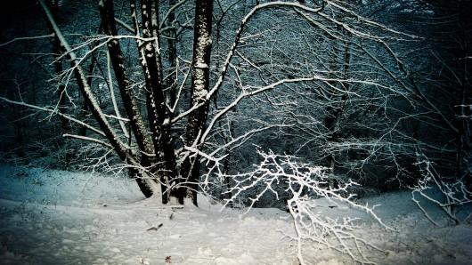 So schön ein Waldspaziergang im Schnee auch ist - lasst es lieber. (Symbolbild)