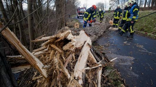 Ein Baum ist bei Eisenach auf einer Frau auf ihr Auto gekracht. (Archivfoto)