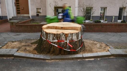 In Erfurt sollen Bäume gefällt werden.