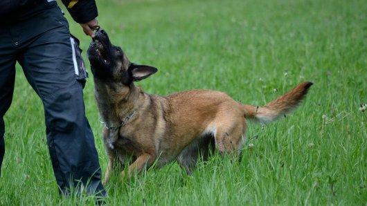 Ein Hund hat in Thüringen für einen Polizeieinsatz gesorgt. Jetzt warnen die Beamten.