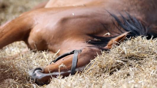 Auf besonders abstoßende Weise wurden in den vergangenen Monaten in Thüringen immer wieder Pferde massakriert.
