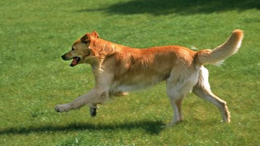 Ein freilaufender Hund soll in dem kleinen Ort im Unstrut-Hainich-Kreis eine Frau attackiert haben. Schon zum wiederholten Mal.