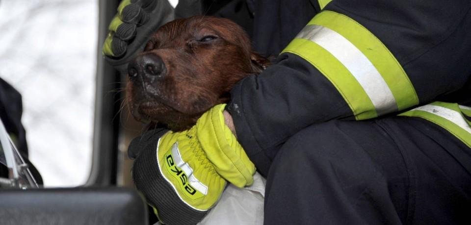 Zwei Hunde wurden in Thüringen von ihrem Halter alleine gelassen. Plötzlich gerieten sie in schreckliche Not.