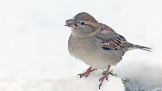 Am Wochenende könnte in den Höhenlagen des Harz der erste Schnee liegen bleiben. (Archivbild)