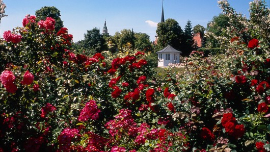 Rosengarten in Bad Langensalza (Archivfoto)