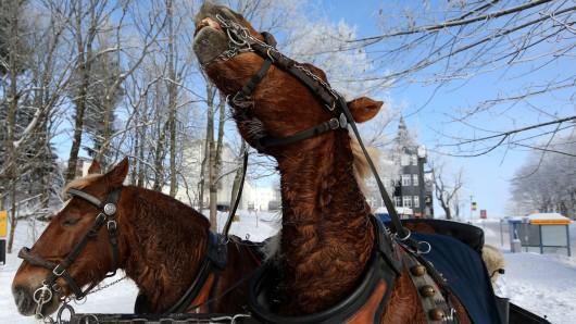 In Oberhof haben Pferde ihre Kutscherin abgeworfen. (Symbolbild)