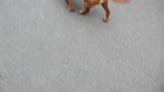 Im Eichsfeld sind zwei Hunde von einem Auto erfasst worden.