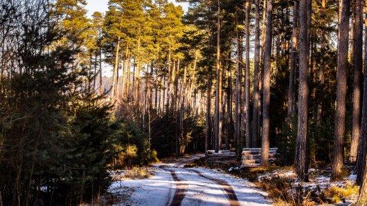 Thüringen: Experten warnen! Vorsicht im Wald vor diesen Gefahren...