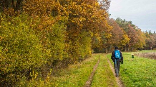 Ein Wanderer in Thüringen macht im Wald einen gefährlichen Fund. (Symbolbild)